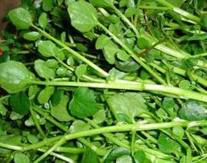 西洋菜的种植方法